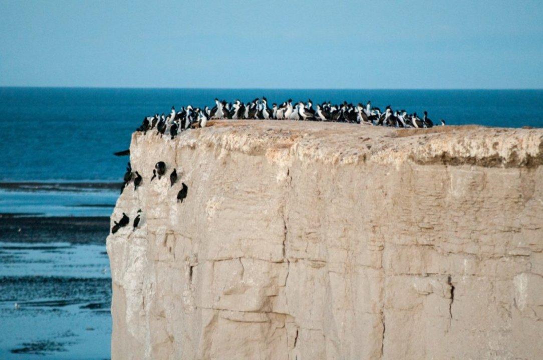 La verticalidad del farallón hace que sea el lugar ideal para el descanso de las aves marinas.