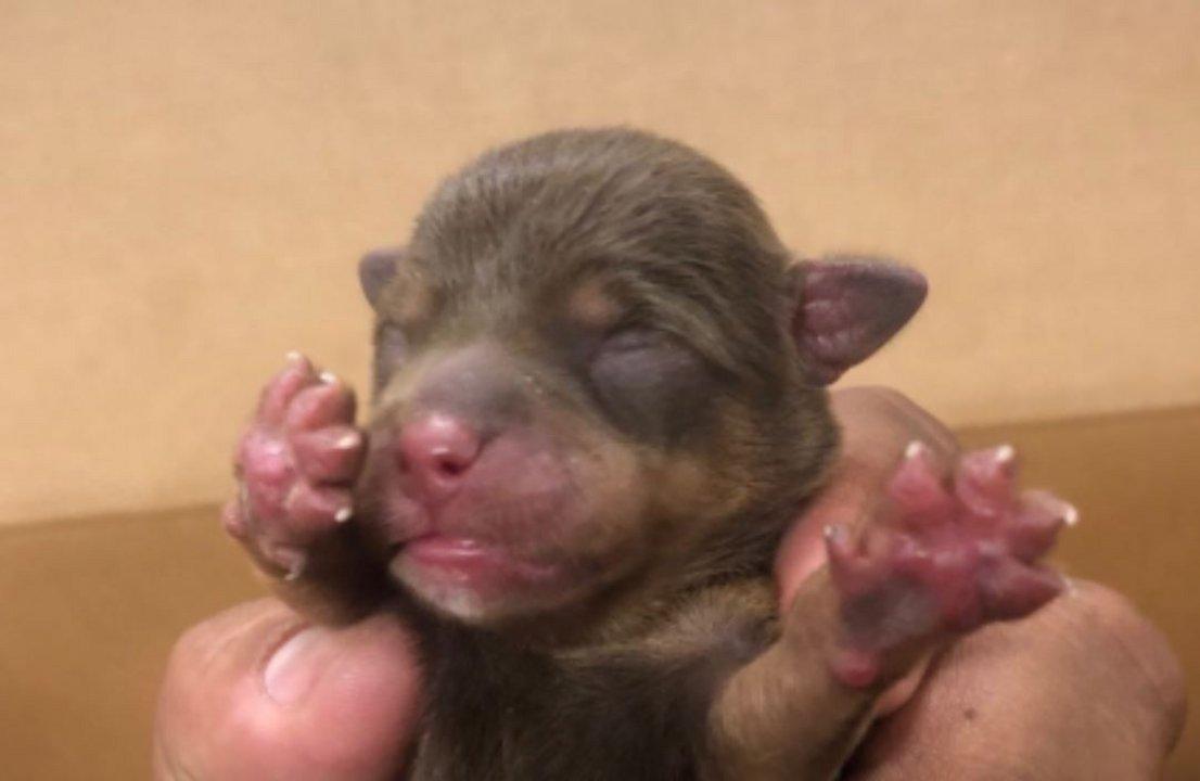 Uno de los pequeños cachorritos de apenas 3 días que habían sido tirados a la basura
