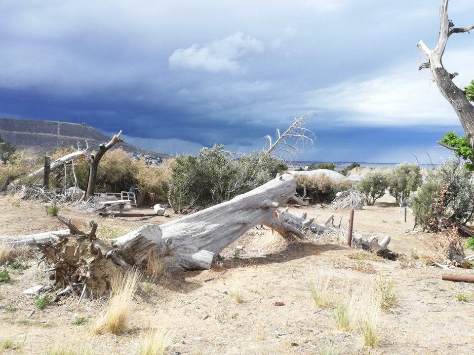 En la década del 80 una plaga devastó el pinar.