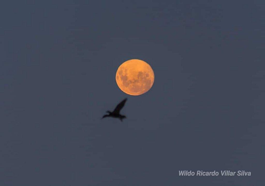 Superluna en Comodoro (Wildo Villar Silva)
