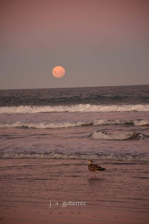 Superluna en Rada Tilly (Jorge Ariel Gutierrez)