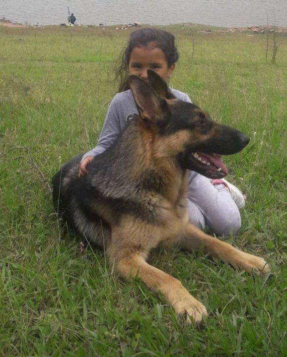 Gracias a Noelia y los mascoteros, Roni pudo reencontrarse con su familia y seguir camino a Río Turbio.